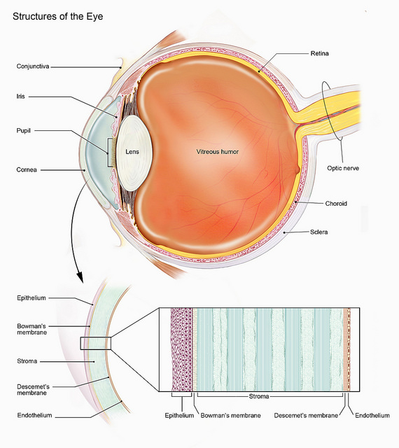 diagram of eye structure